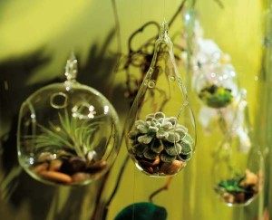 Less is more: small, hanging glass vessels that can accommodate a plant or two can be grouped to make a big impact.