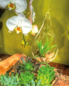 Orchids are the perfect complement for terrariums.