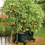 EarthBox® gardening system