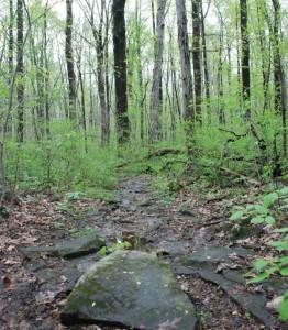 Bellaire Woods