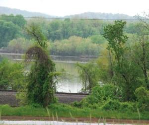 Mud flats on the Susquehanna River at Washington Boro