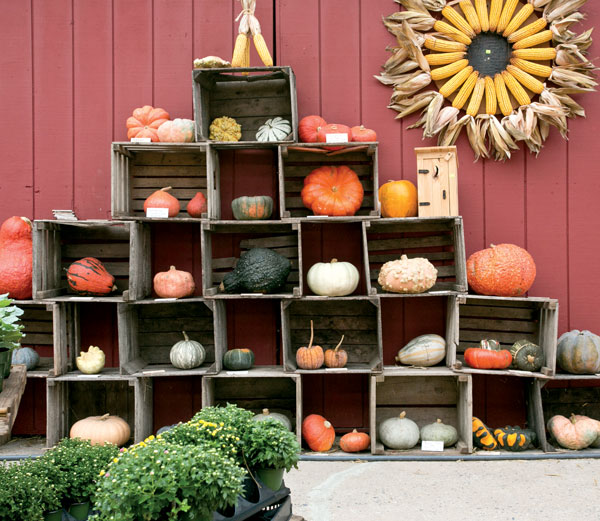 A pyramid built from crates provides a way in which pumpkins and squash can be creatively displayed. The corn wreath made its debut last year.