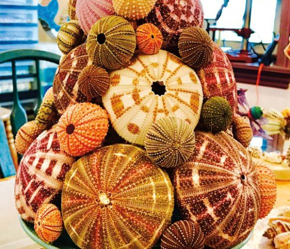 A project that Andrea is currently working on. A holiday tree she created using sea urchin shells. Photo by Sue Long.