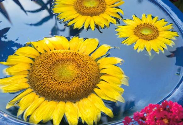 Sunflowers floating in a birdbath provided a simple, colorful and creative way to welcome guests to the party.