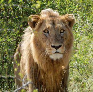 A resident of Kruger National Park.