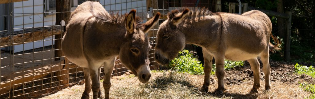An Enchanting Story About a Donkey