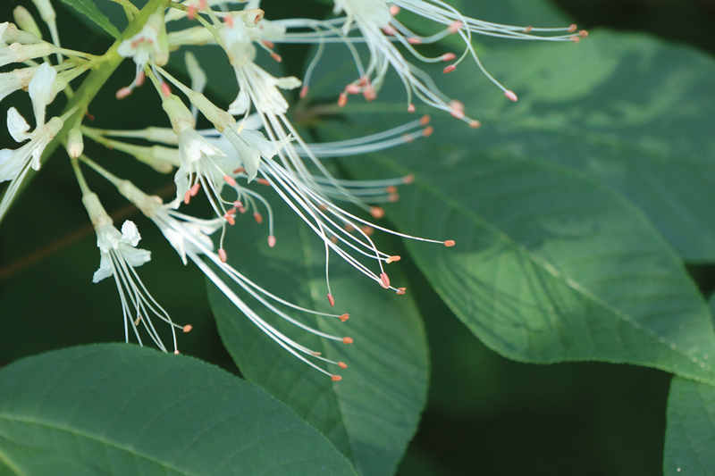 Go Native With Woody Shrubs