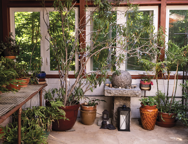 HOUSE PLANTS … A Craze is Reborn on bathroom filled with plants, bedroom filled with plants, house full of plants, house books,