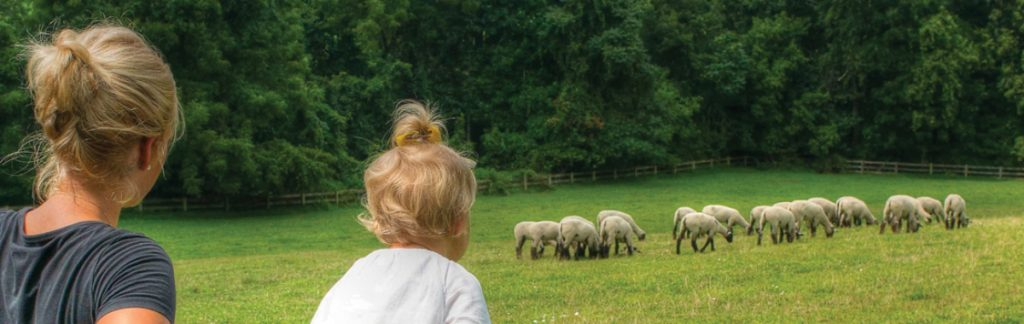 Tudbink's … Plants, Sheep and Family