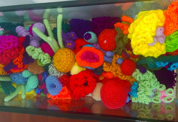 coral-reef-3