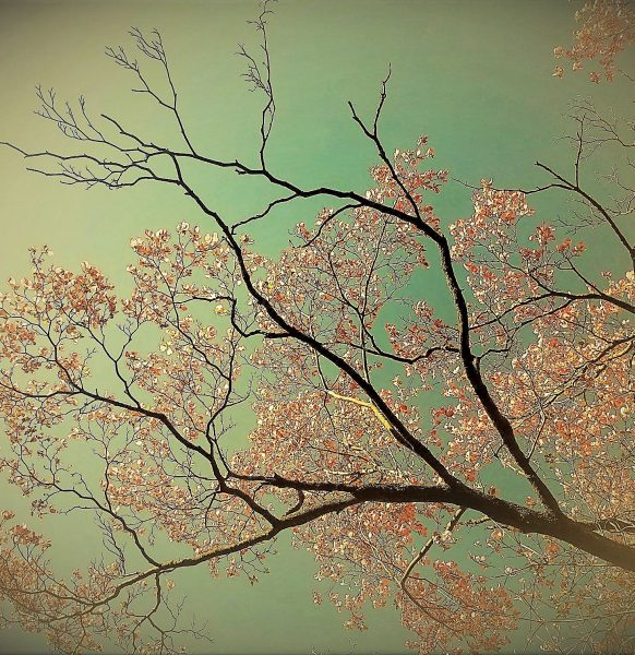 dogwood-black-branches-5