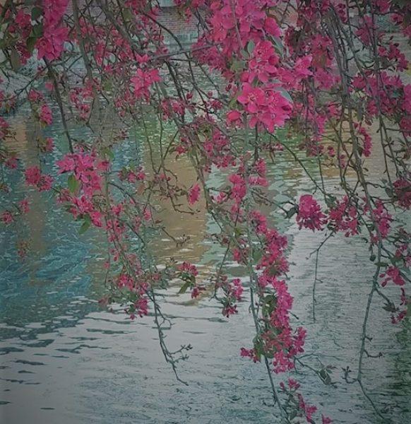 hanging-dark-blossoms-2
